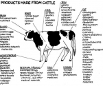 products-made-from-cattle-2