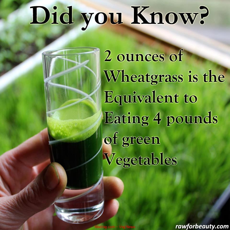 wheet-grass
